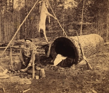 Deer Hunter Living In A Log , 1893.